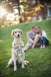 wedding photo - 15 Dogs At Weddings That Will Make You Feel All The Emotions