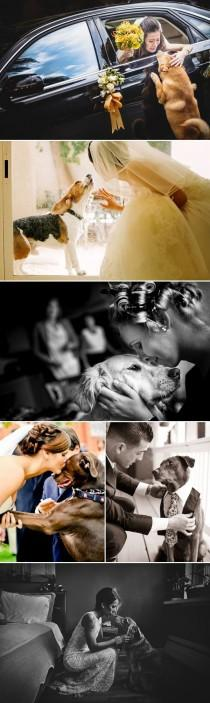 wedding photo - 28 Precious Wedding Moments With Dogs And Their Promises