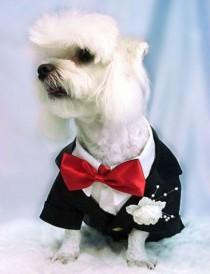 wedding photo - The Well-Dressed Dog At A Wedding: Trend-Setting Elegance For Dog Grooms