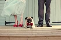 wedding photo - Wedding Fashions For Cats And Dogs