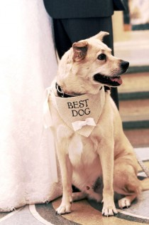 wedding photo - Ivory Best Dog Boy Bowtie Dog Collar Bandana Rustic Burlap Wedding Photo Prop