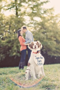 wedding photo - 29 Perfectly Adorable Ways To Include Your Pet In Your Wedding
