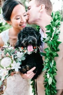 wedding photo - 17 Wedding Pooches We Adore