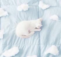 wedding photo - Aesthetic, Blue, Cat, Cloud, Pale