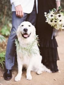 wedding photo - Top 10 Cutest And Most Lovable Dogs At The Wedding