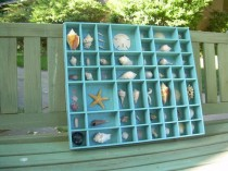 wedding photo - Shell Collection In A Turquoise Printer's Tray