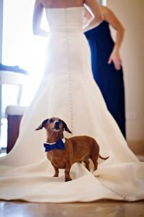 wedding photo - Wiener Love