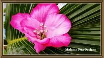 "wedding photo - PINK HIBISCUS HAIR Flower - ""Real Touch"" Tropical Silk Flower, Hawaiian, Headpiece, Bridal Flower Clip, Faux diamond center, Beach Wedding"
