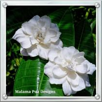 wedding photo - WEDDING HAIR FLOWERS - Pair of Hawaiian Delphiniums, Beach, Bridesmaid, silk hair flowers, Headpiece, Crystal Center, Bridal Clip, hair pin