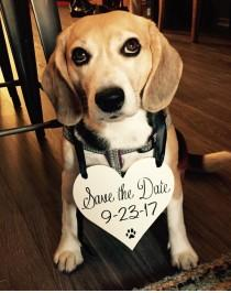 wedding photo - Dog Save the Date sign