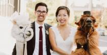 wedding photo - Now You Can Actually Hire Dapper Llamas To Attend Your Wedding