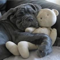 wedding photo - 38 mascotas que duermen como bebés con su peluche favorito