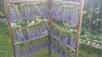 wedding photo - Dried lavender bunches