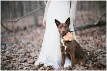 wedding photo - Pets In Weddings