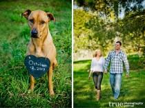 wedding photo - 10 Purr-fect Ways To Include Your Pets In Your Wedding