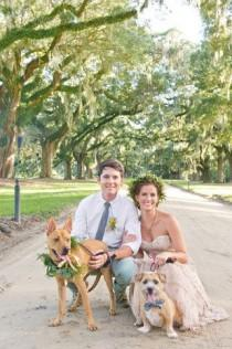 wedding photo - Wedding Pets
