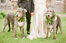 wedding photo - 16 Perfect Photos Of Pets At Weddings