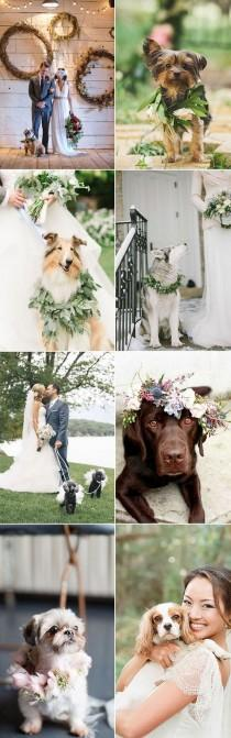 wedding photo - Dogs At Weddings: Your Big Day & Your Pet