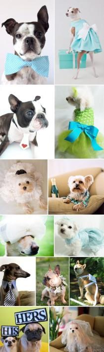 wedding photo - Super Cute! Wedding Dogs
