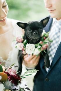 wedding photo - Paws For A Cause: Celebrate Puppy Love With Toast   Finn's Wedding