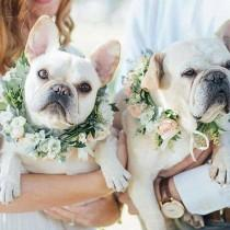 wedding photo - Pets