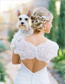 wedding photo - How To Include Your Dog In Your Wedding Day