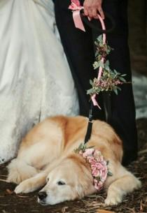 wedding photo - Dogs At Weddings: 35 Furry Friends That Are SO Into Your Wedding Day