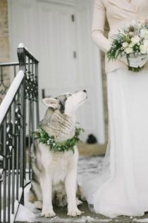 wedding photo - WEDDING DOGS - Wedding Therapy