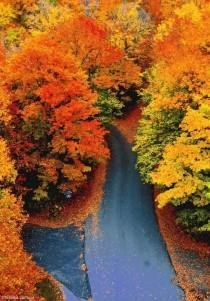 wedding photo - Guide To Foliage Season In Vermont