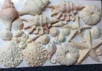 wedding photo - Edible seashells & Starfish (mixed sizes)