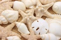 wedding photo - Seashells Cake Topper Sugar Paste Realistic in Natural Ivory- Set of 16