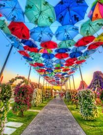 wedding photo - World's Biggest Flower Garden, Miracle Garden In Dubai