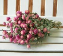 wedding photo - DRIED FLOWERS BOUQUET bi-colored Lovely Rose pink color Globe Amaranth Dried Flowers Bouquet pink gomphrena flower bunch Prim Wedding floral