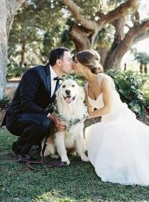 wedding photo - 18 Precious Wedding Photo Ideas With Your Dogs