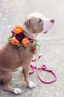wedding photo - Pit Bulls