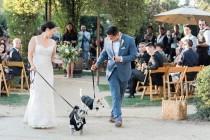 wedding photo - Wedding Pets