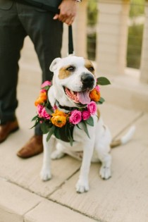 wedding photo - Cute Wedding Dog Idea - Wedding Dog With Floral Collar {RK Weddings & Events}