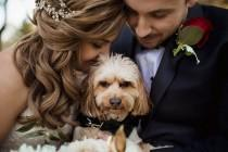 wedding photo - Cute Wedding Dog Idea - #weddingdog {Alisa Sue Photography}