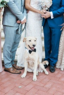 wedding photo - Cute Wedding Dog Idea - Dog In Bowtie  {Hoste Events}