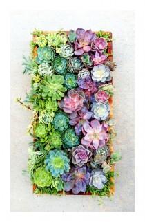 wedding photo - Succulents In Vertical Panel