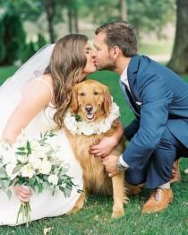 wedding photo - Cute Wedding Dog Photo Idea - Bride   Groom {Erin Wilson Photography}