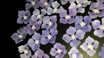 wedding photo - 26 Edible HYDRANGEA Flowers / any color / Gum Paste / fondant /sugar flower / cake or cupcake decoration or toppers