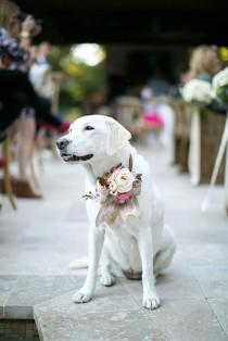 wedding photo - 30 Gorgeous Photo Ideas Of Wedding Pets For Your Album