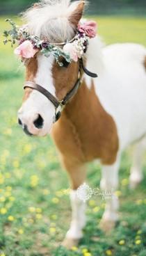 wedding photo - Boho Pins: Top 10 Pins Of The Week From Pinterest - Pets At Weddings
