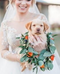 wedding photo - This Dreamy @blushbyhayleypaige And Her Adorable Pup-quet Is Melting Our Hearts For Our #MondayMood!!