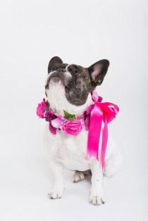 wedding photo - Valentine Collar