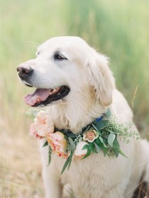 wedding photo - So Naturally Any Wedding That Has A Gorgeous Pup In It Captures My Heart And This Beautiful Mountain Wedding By MONTANA WEDDING PHO…