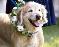 wedding photo - Is Your Pet Attending Your Wedding Have You Ever Been To A Wedding