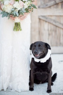 wedding photo - Black Lab   Wedding Pet Attire - Include Your Pets In Your Wedding {Emotive Photo}