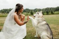wedding photo - Including Your Pets In Your Wedding Day Pictures - Wedding Pets {Yellow Tree Photography}